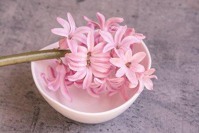 Hyacint parfum geurolie voor Zeep , Melts & Kaarsen
