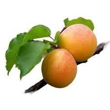 Abrikozen geurolie voor Melts , Kaarsen en Zeep