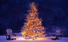 Christmas Berry parfum olie voor Melts , Kaarsen en Diffuser