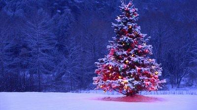 Christmastree parfum  geurolie voor Melts,Kaarsen en Zeep