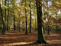 Woodland Walk parfum geurolie voor Melts en Kaarsen