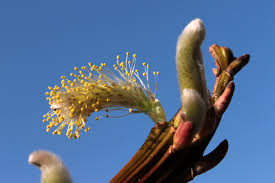 Spring Awaking parfum geurolie voor Melts en Kaarsen