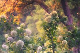 Twilight Garden parfum geurolie voor Melts & Kaarsen