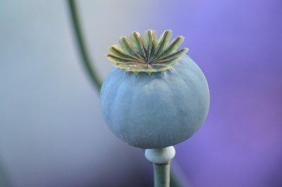Opium Can Glow parfum geurolie voor Melts & Kaarsen