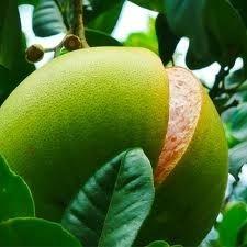 Grapefruit Ylang-Ylang - geurolie voor Melts, Kaarsen en Zeep