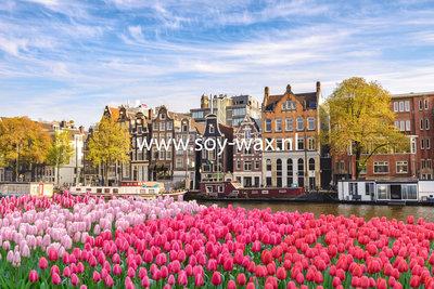 Tulpen uit Amsterdam parfum geurolie voor Melts en Kaarsen