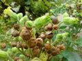 Tobacco-Oak-parfum-geurolie-voor-Melts-Kaarsen