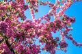 Cherry-Blossom-Magnolia-Parfum-geurolie-voor-Melts-,-Kaarsen-en-Zeep