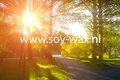 Sunny-Day-Wasparfum-BY-soy-wax