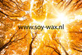 Golden-Woods-Wasparfum-BY-soy-wax