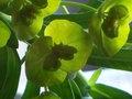 Cliniek parfum geur olie voor Melts en Kaarsen